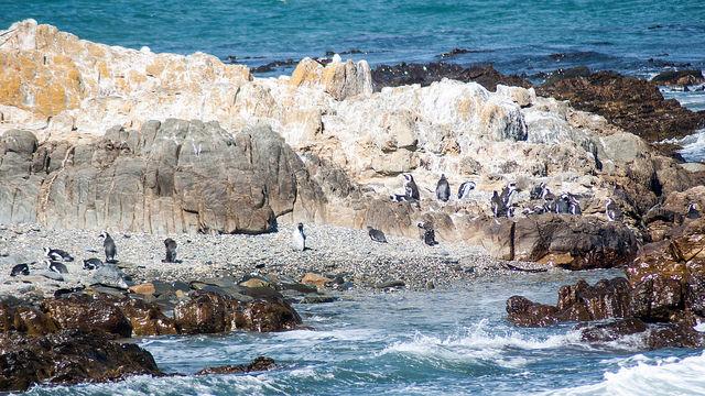 Tour Robben Island